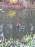 Pond, forsythia, iris, and drainage