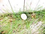 Egg in Grass