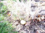 Egg under Bush