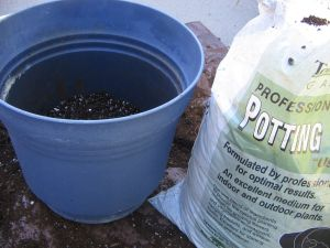 Pot with potting soil