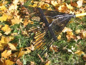 Rake in Fallen Leaves