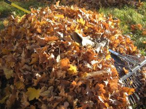 Leaf Pile with Gloves