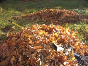 Two Leaf Piles